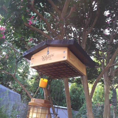 Upside-down suet cake feeders keep birds like starlings and blue jays from gobbling up all your suet!