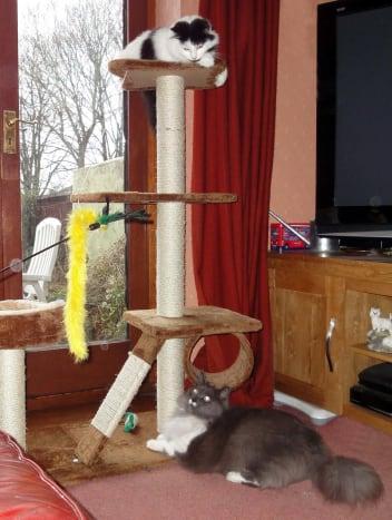 cat-interactive-feeder-toys