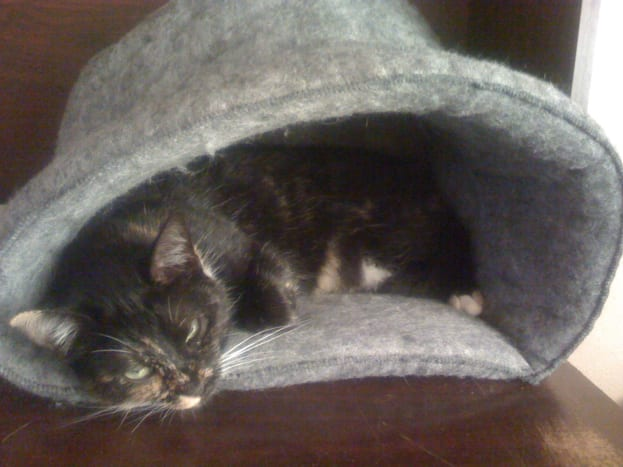 Cat half asleep in a cat bed.