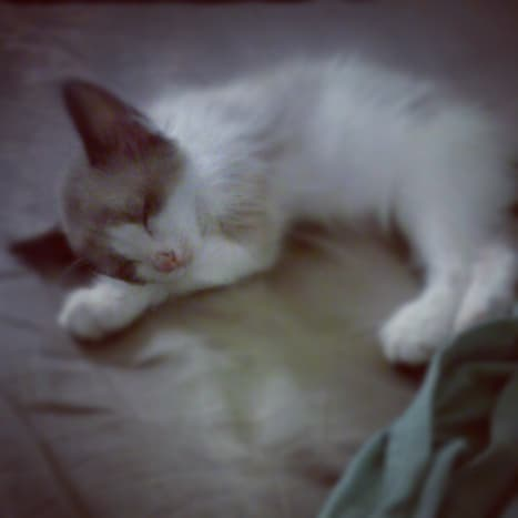 Baby Finnick!