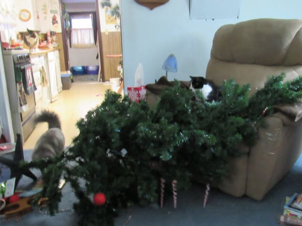 My aunt's cat successfully destroyed the Christmas tree last year.