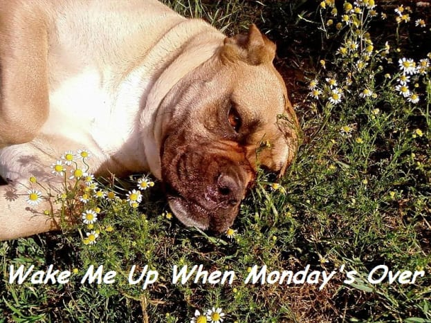Meme for the Monday Blues
