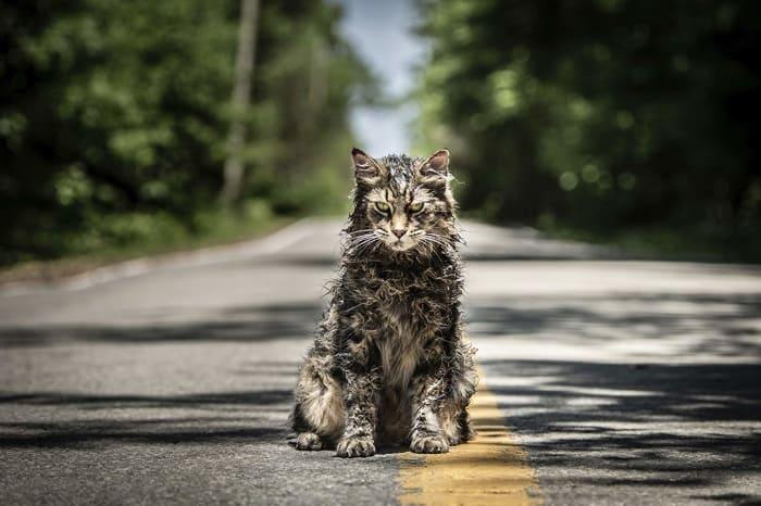 Creepy ass cat... 2019