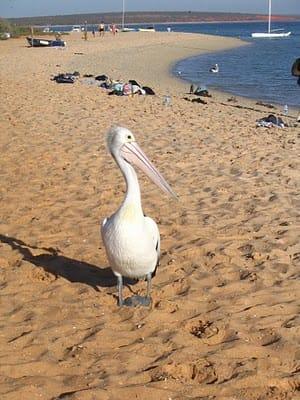 visit-australia-best-beach-destinations-in-western-australia