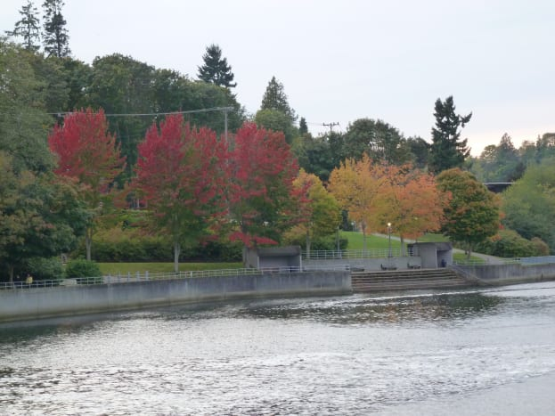 places-to-visit-in-seattle-the-ballard-locks