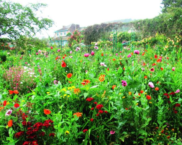 Raw, untamed beauty, a massive sea of flowers.