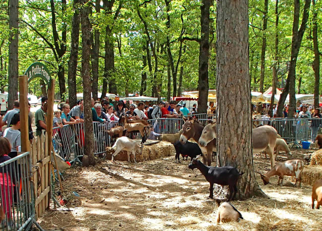 Farm-animal petting zoo at festival.