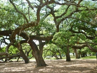 Majestic old oak trees make Baldwin Park special.