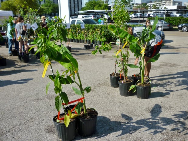 Many potted trees at the Eastside Farmer's Market