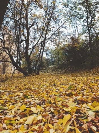 Fall in Memory Grove Park