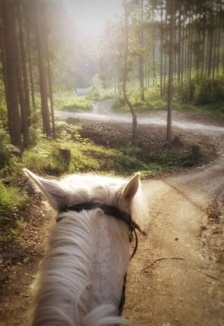 Take a two to six hour journey though the Triglav National Park with a horse!