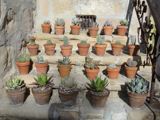 Cacti specimens