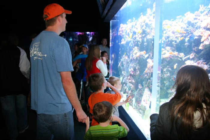 Looking at the large saltwater tank that contains clown fish, tangs, and more.