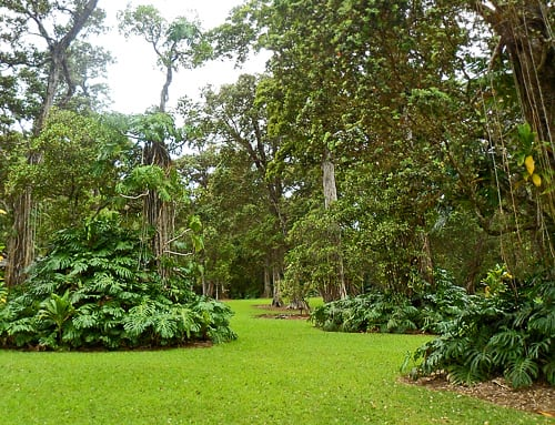 The lush arboretum