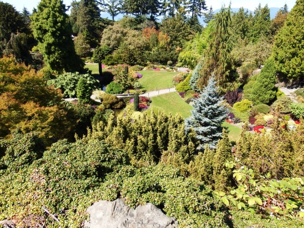 Lovely photos of the quarry plants can be taken above a quarry garden and within it.