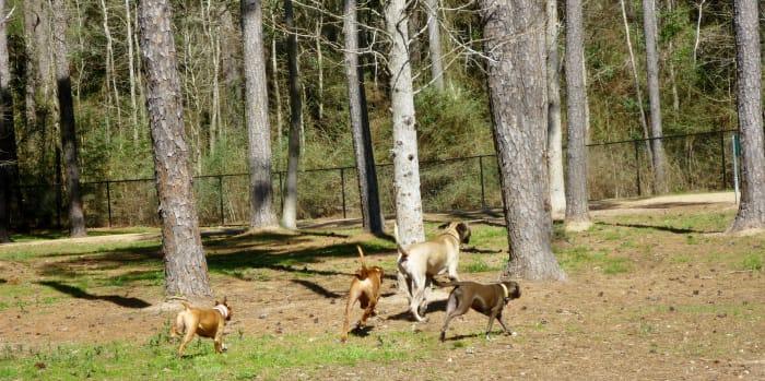 Dog Park in Burroughs Park