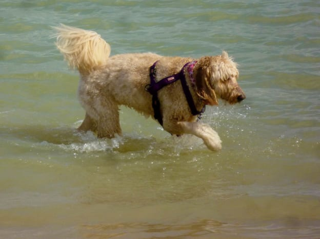 Cute dog playing in the water
