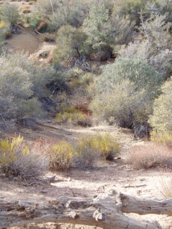 Attractive brush lines the trails and streambed.