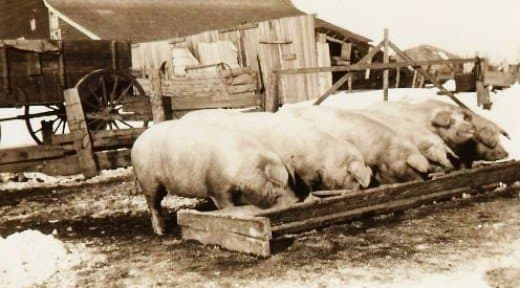 They also had pigs to feed...