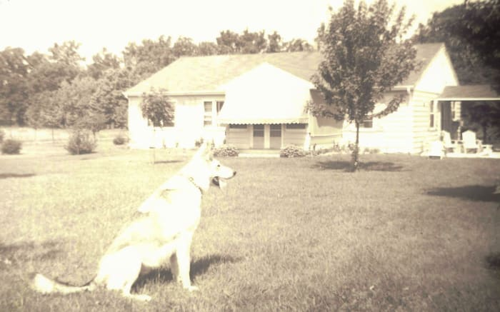 Back of my parent's house showing the sunroom and breezeway (before it was enclosed) between the house and garage.  Our German Shepherd Sheba is in the backyard.