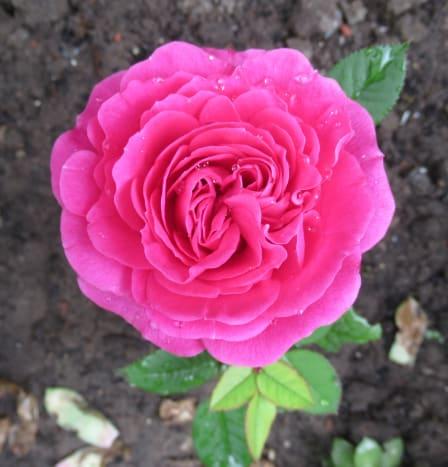 Fabulous Flora
