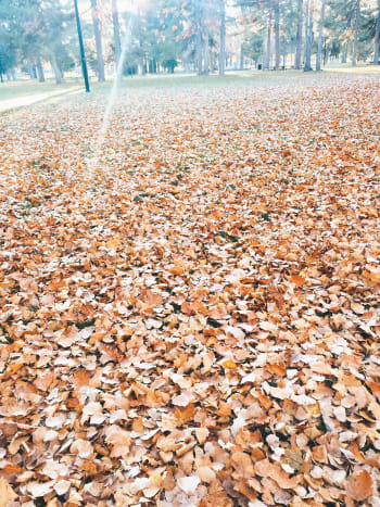 Get out there and rake those leaves!