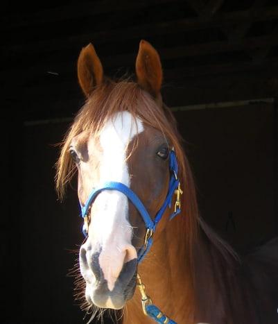 arabian-horses-are-not-crazy