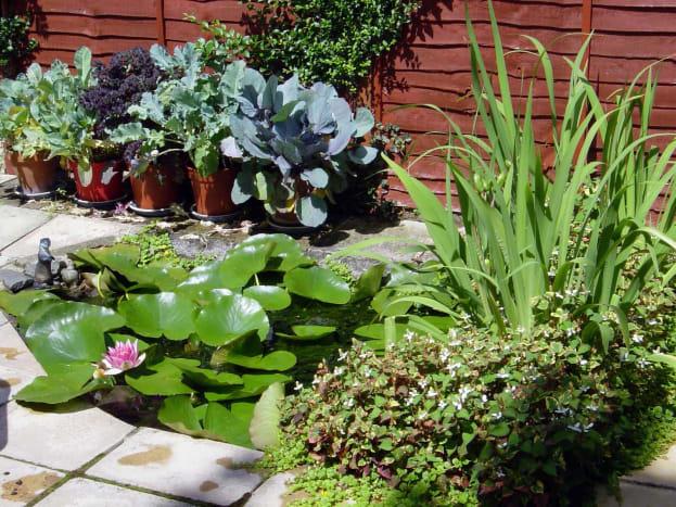 Our Original wildlife pond