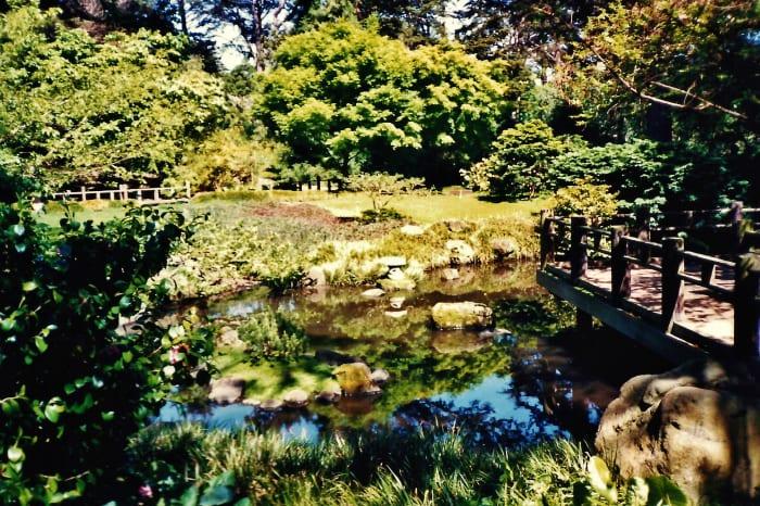 San Francisco Botanical Garden photos / Strybing Arboretum