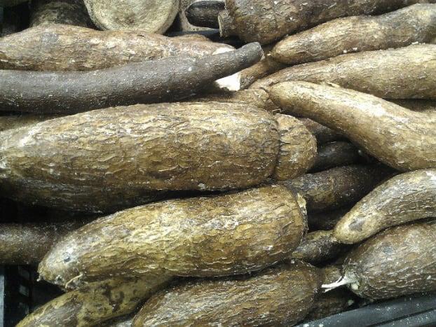 Cassava.