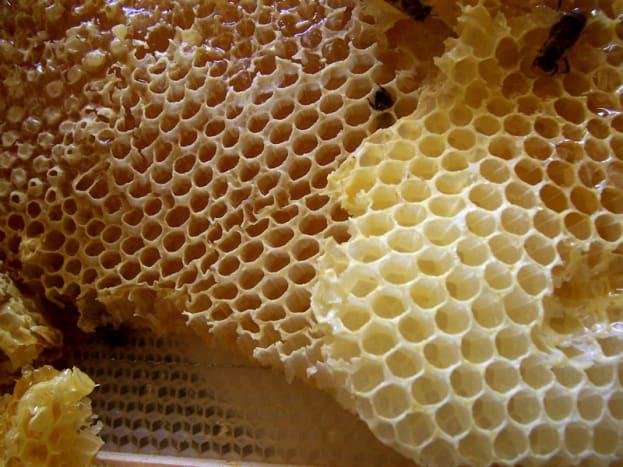 The honey comb