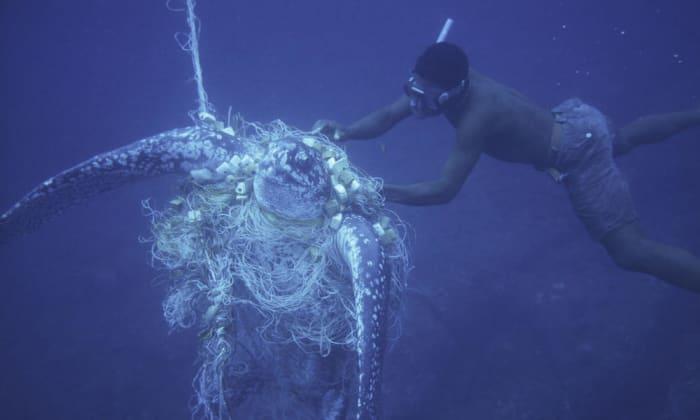 Leatherback turtle Bycatch
