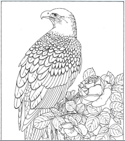 Royalty Free Bald Eagle and Rose Coloring Page: Photo Is Mine