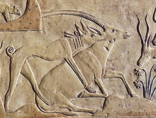 10-ancient-and-wild-dog-breeds