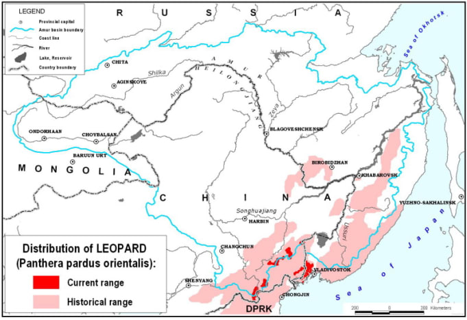 Distribution of the Amur leopard