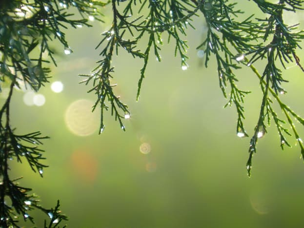 A crisp, dewy pic always invigorates the senses. This would be perfect as an MFP graphic, with the central empty space.