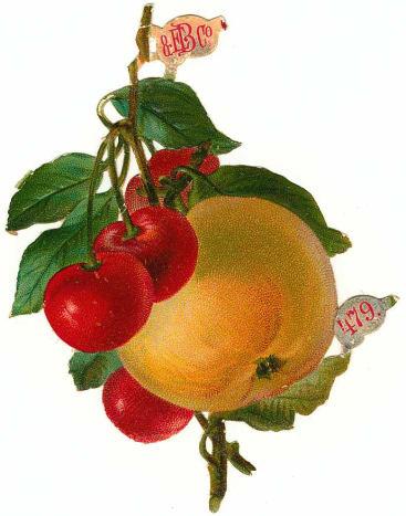 Vintage fruit: Orange with cherries and leaves
