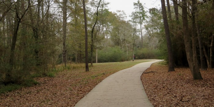The trail in Forested Area