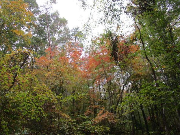Fall colors on the Pinnacle Trail.
