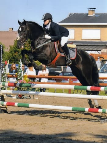 An Andalusian competing in jumping.
