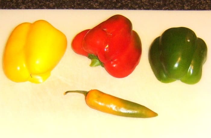 Bell peppers and chilli pepper for spicy conchiglie pasta