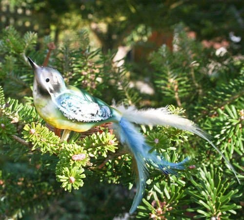 Blue Tit with real feather