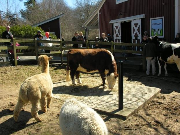 The Kid's Farm, March 2019.