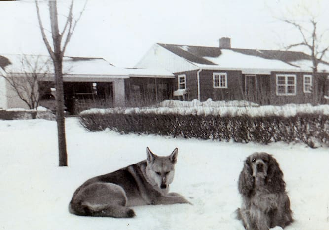 Sheba and Rusty - Our home in background