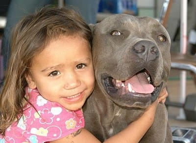 pit-bulls-behind-the-jaws