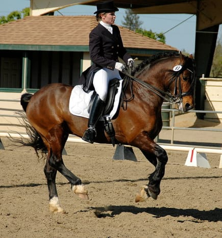 Horse performing a Flying Change