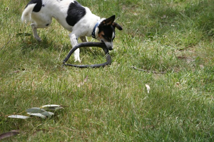 how-i-get-rid-of-snakes-from-my-house-and-yard