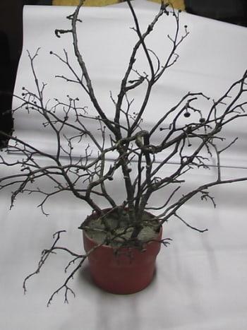 Branches stuck in Styrofoam