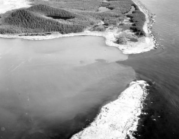 Wave damage on the south shore of Lituya Bay