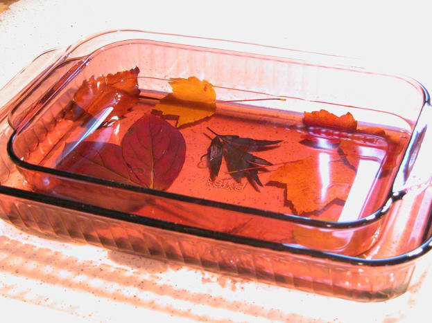 Preserving autumn leaves in glycerine